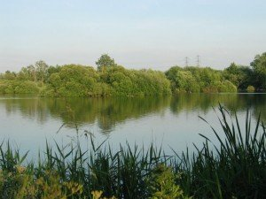 Cheshunt Ponds